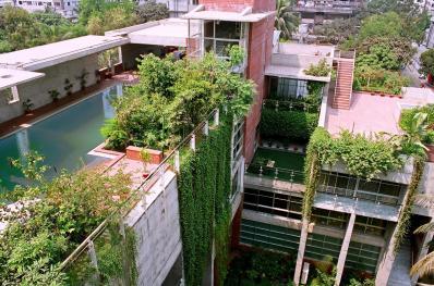 végétalisation